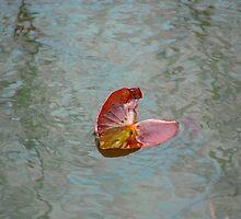 Lily Pretty Pad by vigor