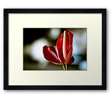 Tropical Flower, Ubud, Bali Framed Print