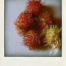 Rambutan Polaroid by Ashlee Betteridge