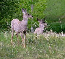 Young Buck And Doe by Al Bourassa