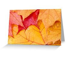 Red maple leaves background Greeting Card