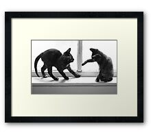 2 Cats Playing in Window Framed Print