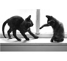2 Cats Playing in Window Photographic Print