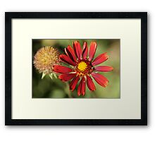 Red flower and flying insect Framed Print