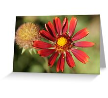 Red flower and flying insect Greeting Card