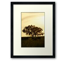 Tree and cattle in Wakarusa Framed Print