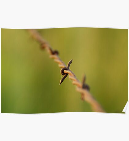 Wire barb in narrow depth Poster
