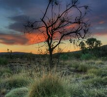 Surviving in the Bush by BarkingGecko