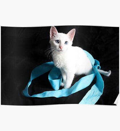 White Kitten with Blue Ribbon Poster