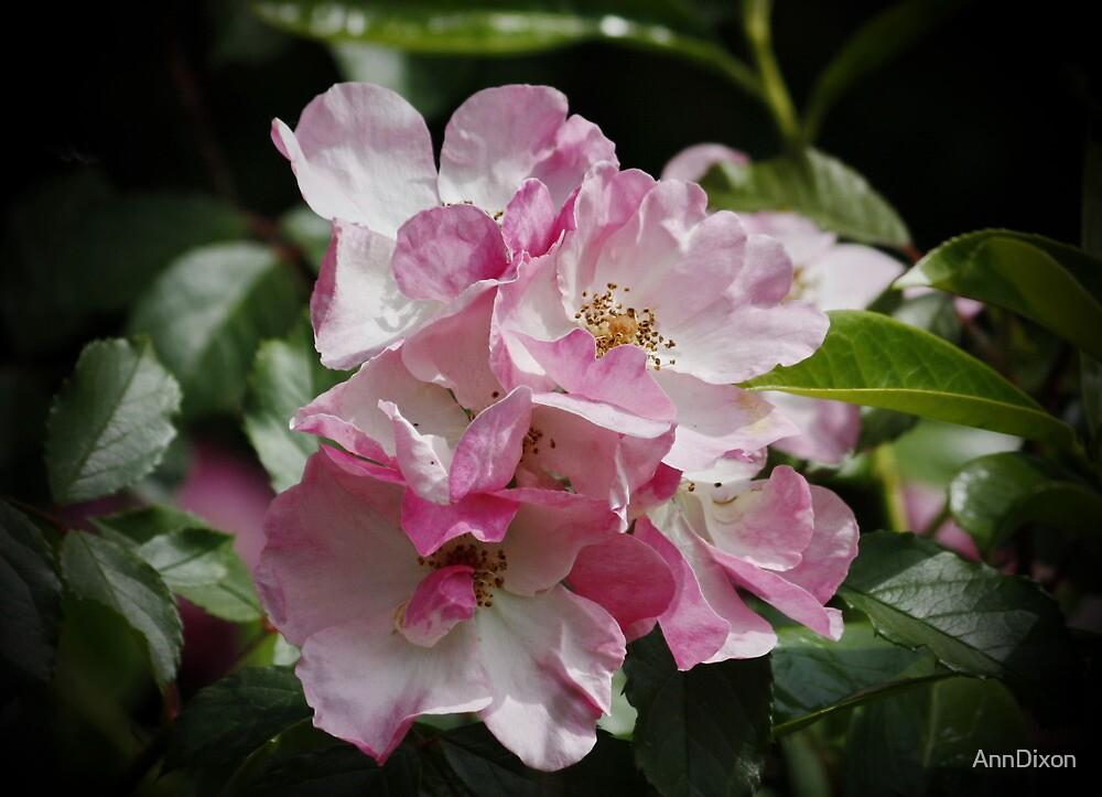 Wild Roses by AnnDixon