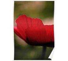 Red Poppy (Side) Poster
