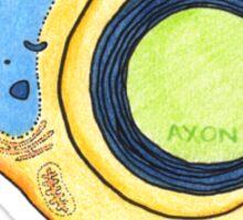 Schwann Cells Sticker