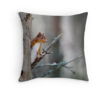 Red Squirrel, Abernethy Forest, Cairngorms Throw Pillow