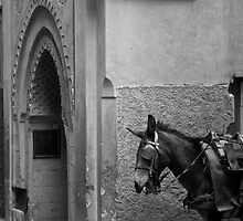 In the Medina by ploux