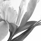 Iris in Black & White by AnnieD