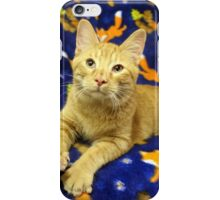 Orange Cat Highlighted with Royal Blue iPhone Case/Skin