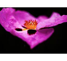 Petal flow Photographic Print