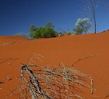 Red sand dune, NT, Australia by Tam  Locke