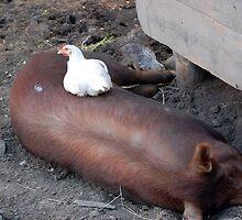 Piggy Back by Steven Squizzero