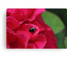 Black Ladybug/Ladybird Canvas Print