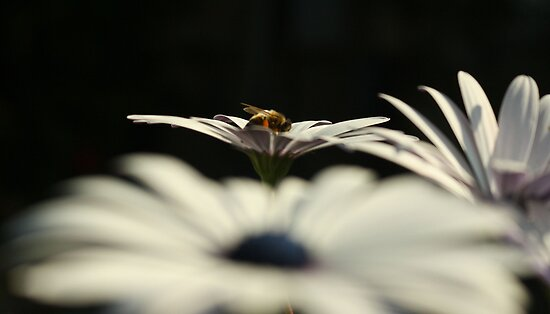 Daisy & Bee by TeAnne