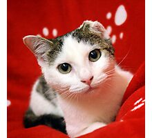 One Eared Rescue Cat Photographic Print