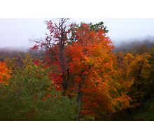 Virginia Trees Photographic Print