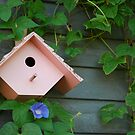Birdhouse with Morning Glories by Suz Garten