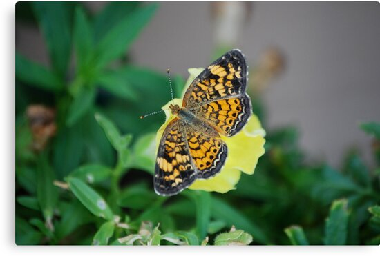 Butterfly on Snapdragon by Suz Garten