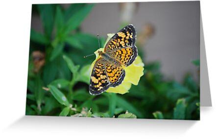 Butterfly on Snapdragon by Suz Garten