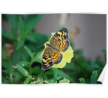 Butterfly on Snapdragon Poster