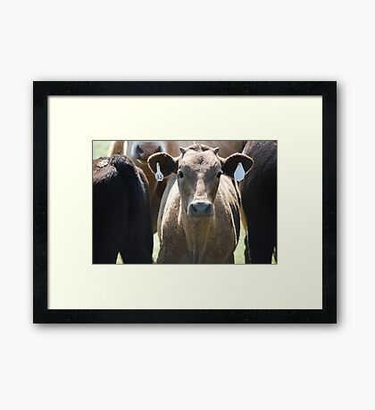 Inquisitive Cow Framed Print