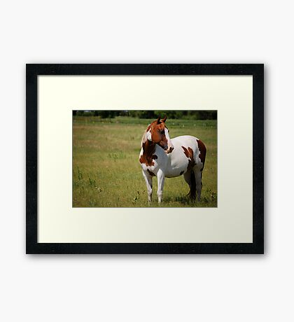 Paint Horse in Repose Framed Print
