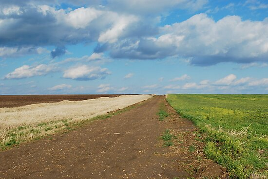 Of Wheat and Sky in Kansas by Suz Garten