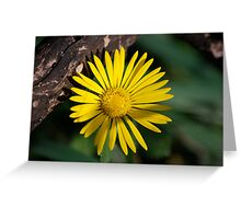 Yellow Compass Wildflower Greeting Card