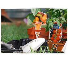 Vegetable Planting Time Poster