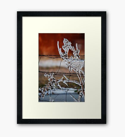 Ice on Weed Framed Print