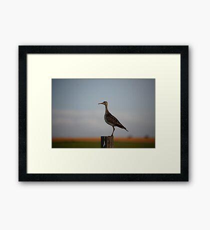 Upland Sandpiper in Kansas Framed Print