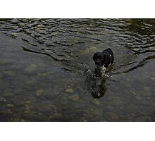 Crystal Clear Water Play - the Splashing Puppy Photographic Print