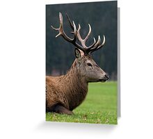 Profile Of A Red Deer Stag - (Cervus elaphus) Greeting Card