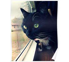 Magyk - Tuxedo Kitten Poster