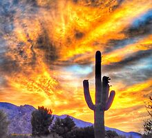A Saturday Morning Sunrise, Tucson Arizona by Terry Temple