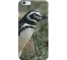 Magellanic Penguin iPhone Case/Skin