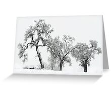 Oaktrees in the Snow Greeting Card