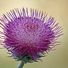 A Thistle Alone (Unframed) by Corri Gryting Gutzman