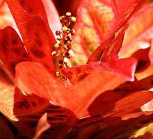 BLAZING COLOR by fsmitchellphoto
