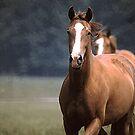 Horses Head-On by WTBird