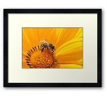 Bumblebee on a flower Framed Print