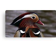 Mandarin Duck Canvas Print