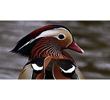 Mandarin Duck Photographic Print